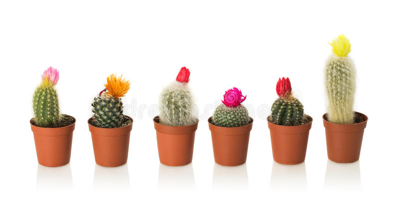 Collection of cactuses stock images