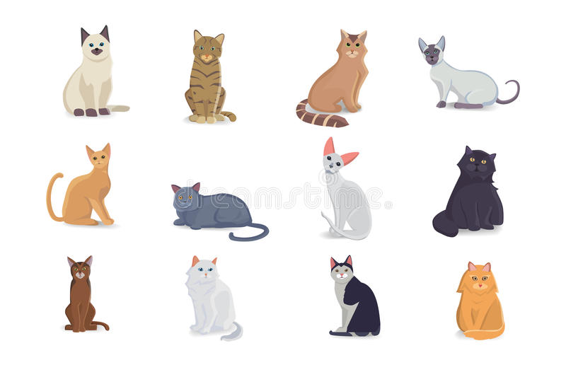 Collection Cats of Different Breeds. Vector cats on white background. Bsg set vector illustration