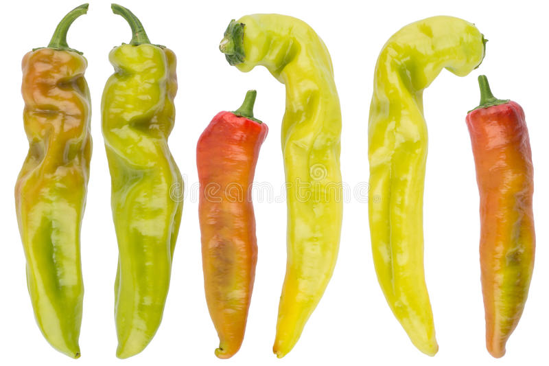 Collection chili pepper isolated on white stock photos