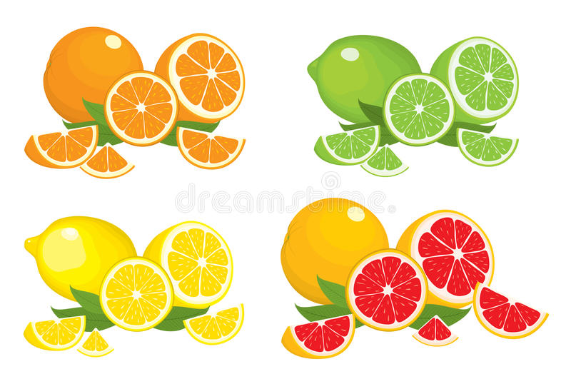 Collection of citrus products - orange, lemon, lime and grapefruit with leaves, isolated on white background. vector illustration