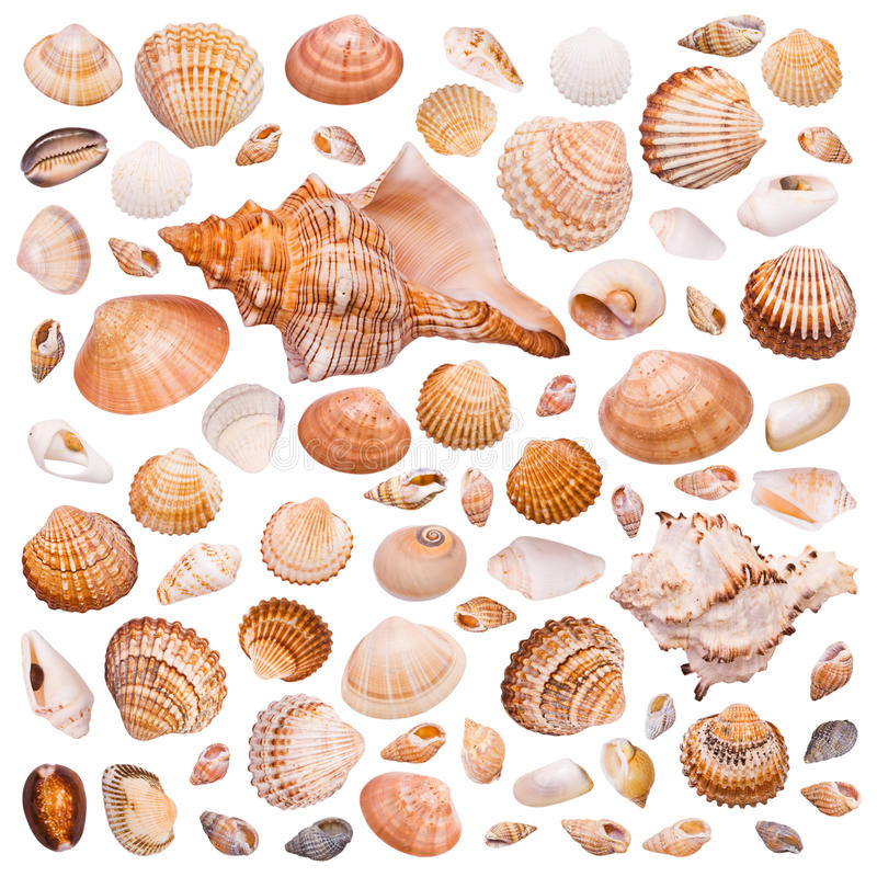 Collection of cockleshell. On the white background stock photos