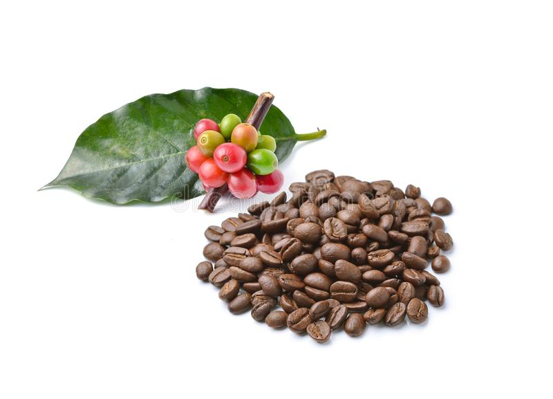 Collection of Coffee beans isolated on white background stock photography
