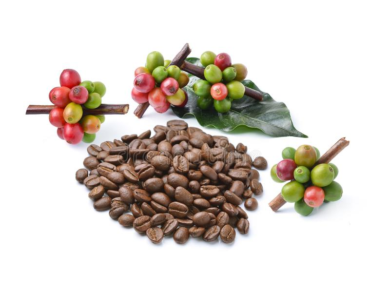 Collection of Coffee beans isolated on white background stock photo