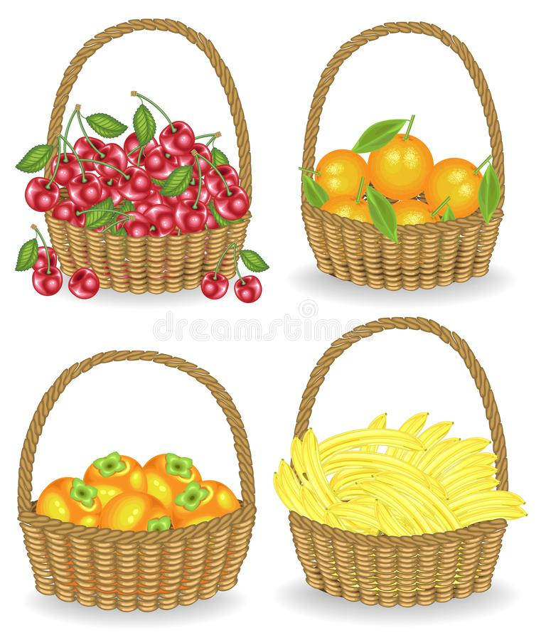 Collection.Collected a rich harvest. The basket is full of ripe juicy fruit. Fresh bananas, oranges, persimmons, cherries, a. Source of vitamins and pleasure stock illustration