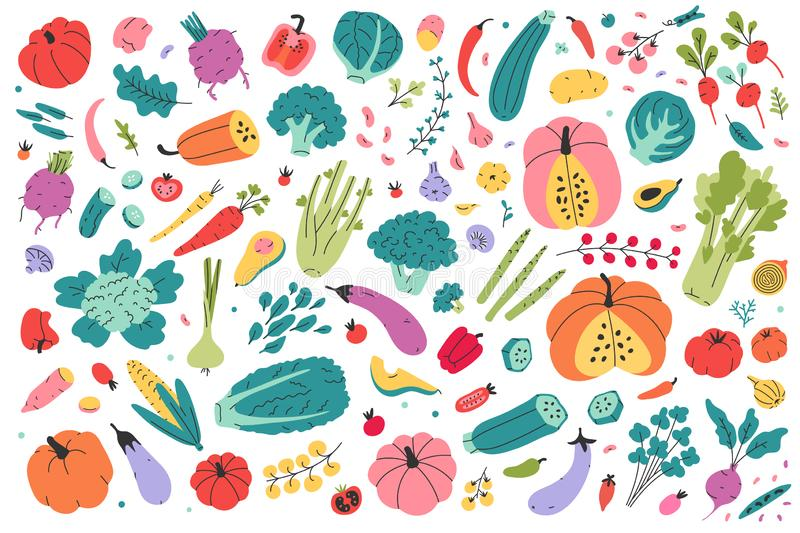 Collection of colored hand drawn fresh vegetables isolated on white background. Big bundle of tasty vegetarian products, wholesome. Healthy food. Flat cartoon vector illustration