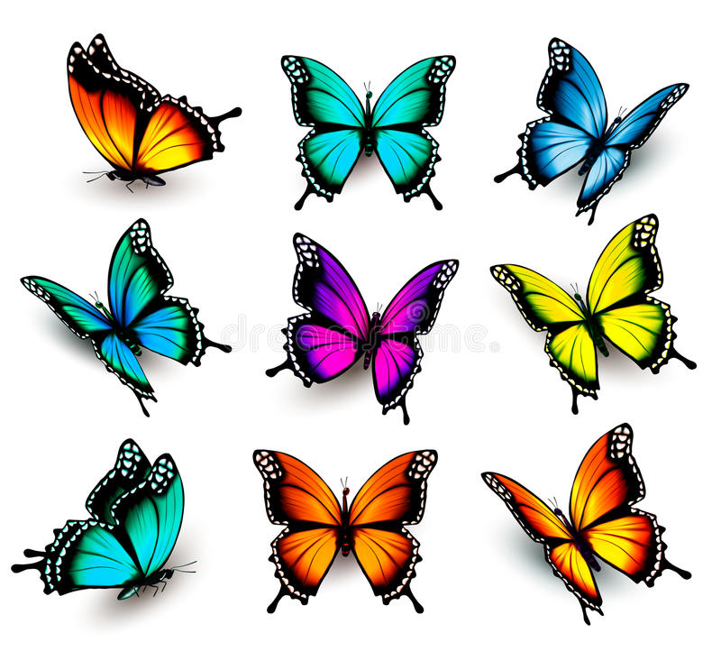 Collection of colorful butterflies. Flying in different directions. Vector royalty free illustration