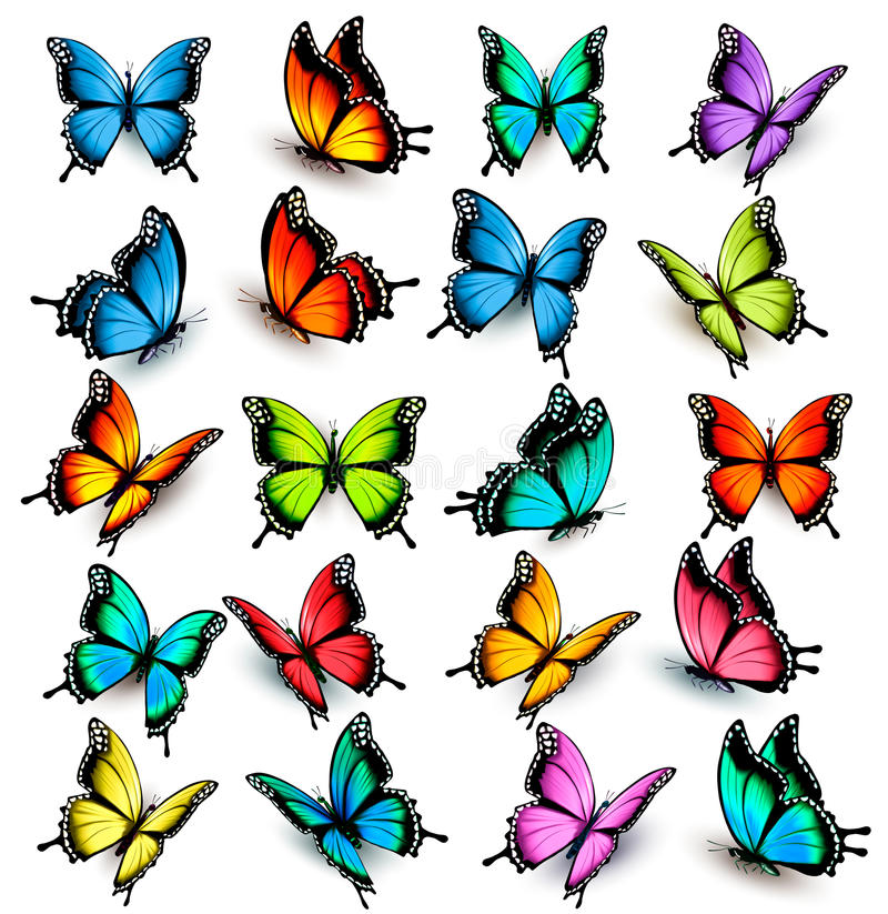 Collection of colorful butterflies. Flying in different directions. Vector stock illustration