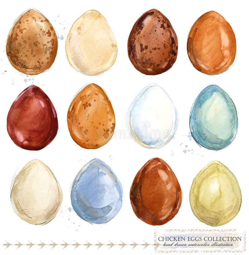 Collection of colorful watercolor chicken eggs. Poultry farming. collection of colorful watercolor chicken eggs. farm animals royalty free illustration