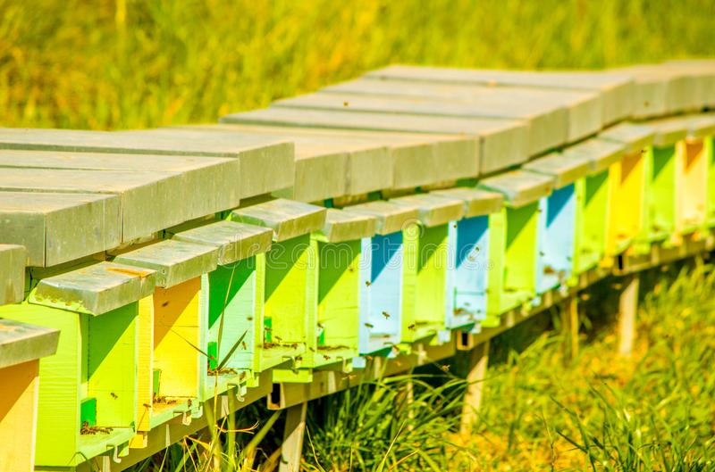 Bee Hives. A collection of colourful bee hives, active with bees collecting honey, in the outbacks of Sicily, Italy royalty free stock photo
