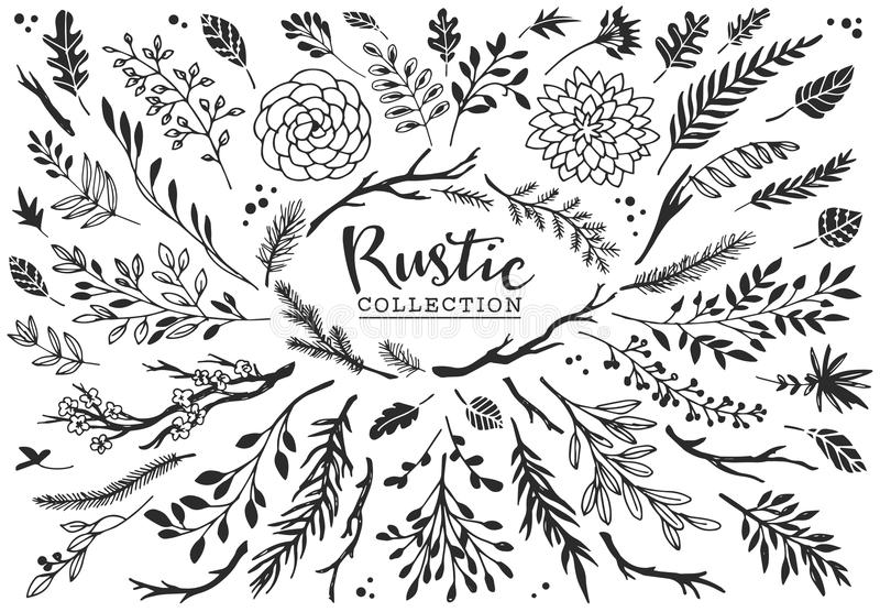 Collection décorative rustique de plantes et de fleurs Tiré par la main illustration de vecteur