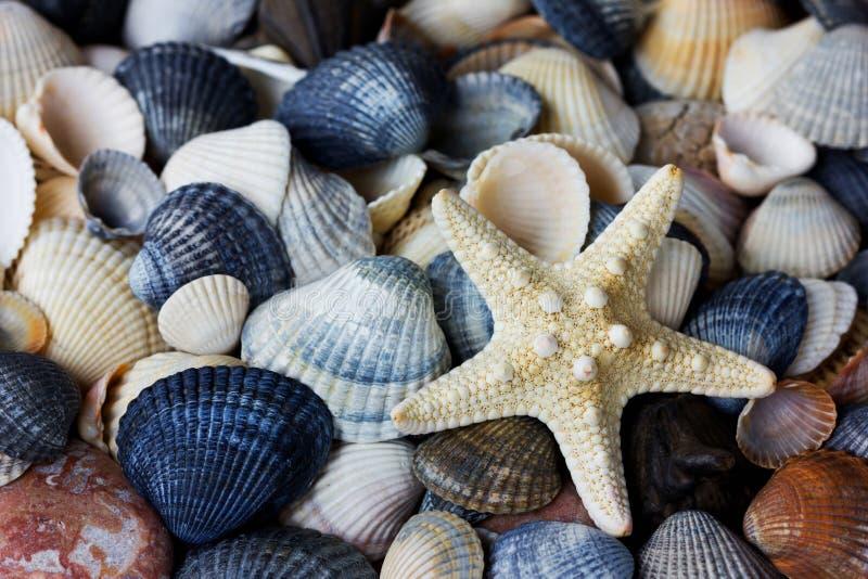 Collection d'étoiles de mer et de coquillages images stock