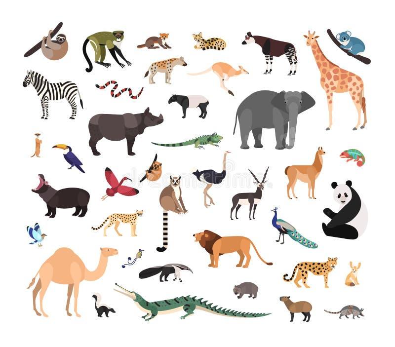 Collection d'animaux sauvages exotiques d'isolement sur le fond blanc Paquet d'espèces de faune vivant dans la savane, jungle et illustration libre de droits