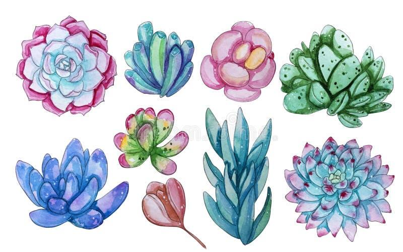 Collection d'aquarelle avec des usines de succulents illustration de vecteur