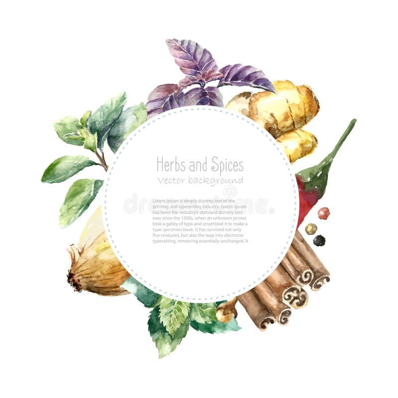 Collection d'aquarelle d'herbes et d'épices fraîches illustration libre de droits