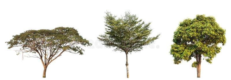 Collection d'arbre dans le jardin d'isolement sur le fond blanc photos libres de droits