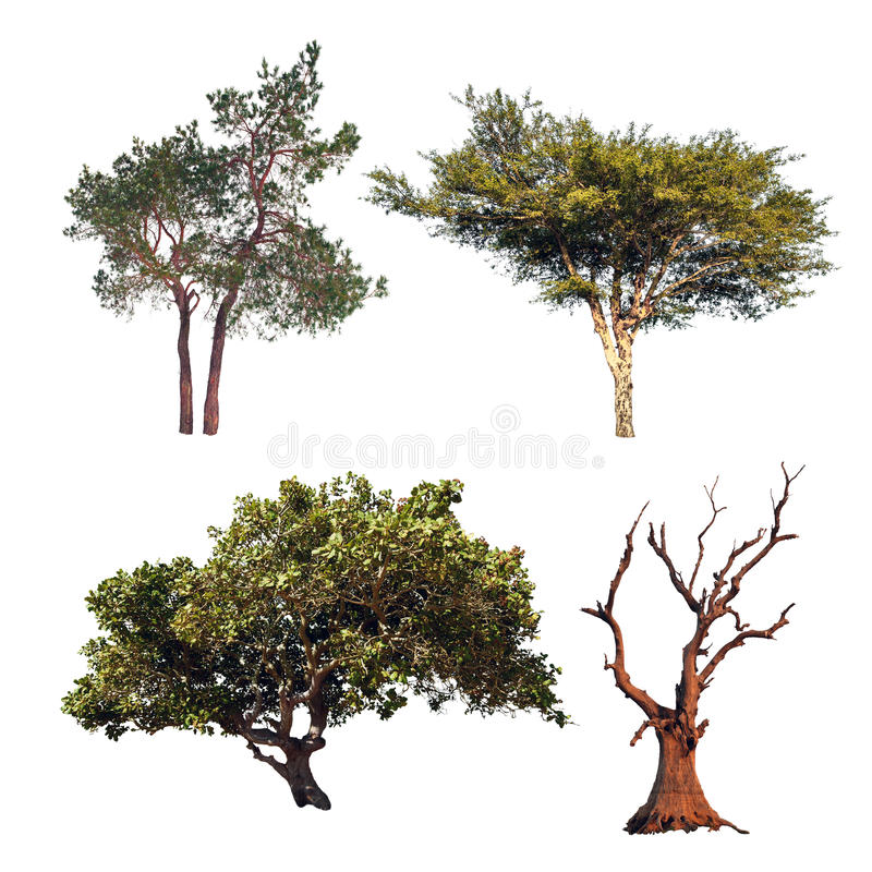 Collection d'arbre Quatre arbres différents d'isolement sur le backgrou blanc image stock