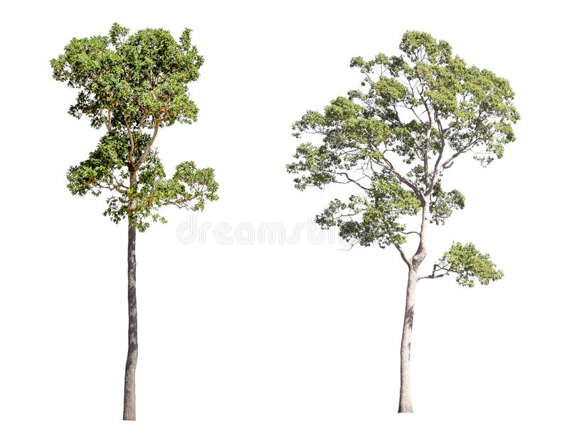 Collection d'arbres d'isolement sur un fond blanc Bel arbre il convient pour l'usage dans la d?coration, la d?coration, et l'impr image stock