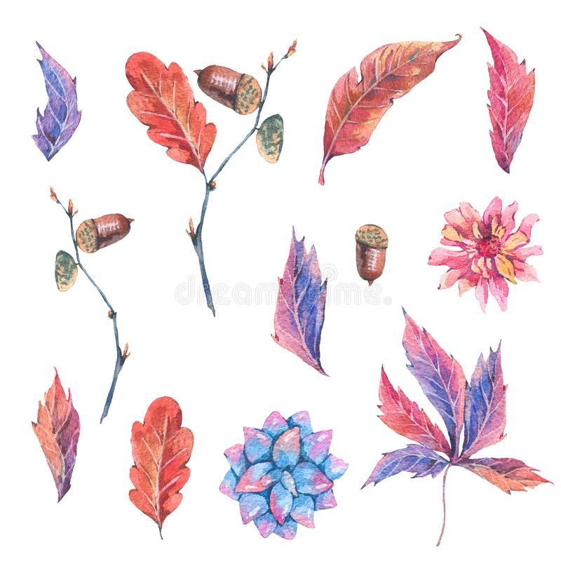 Collection d'automne de forêt d'aquarelle de feuilles illustration de vecteur