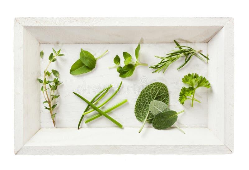 Collection d'herbes photos libres de droits