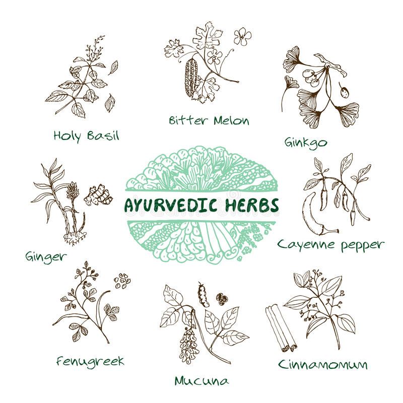 Collection d'herbes d'Ayurvedic illustration stock