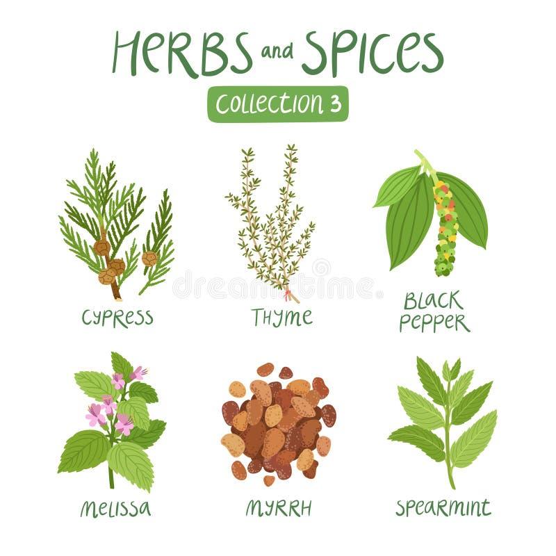 Collection 3 d'herbes et d'épices illustration libre de droits