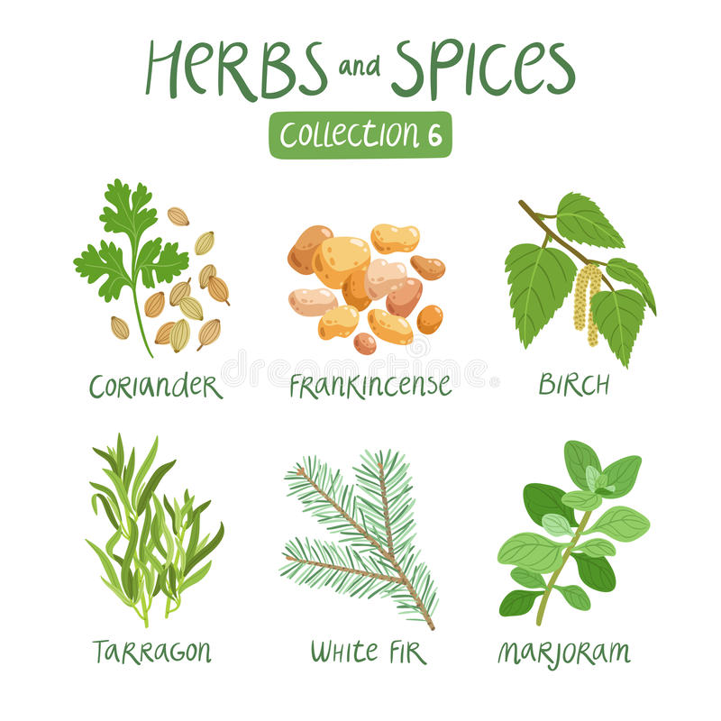 Collection 6 d'herbes et d'épices illustration libre de droits