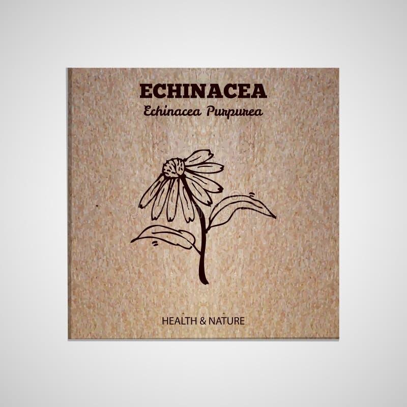 Collection d'herbes et d'épices - Echinacea illustration stock