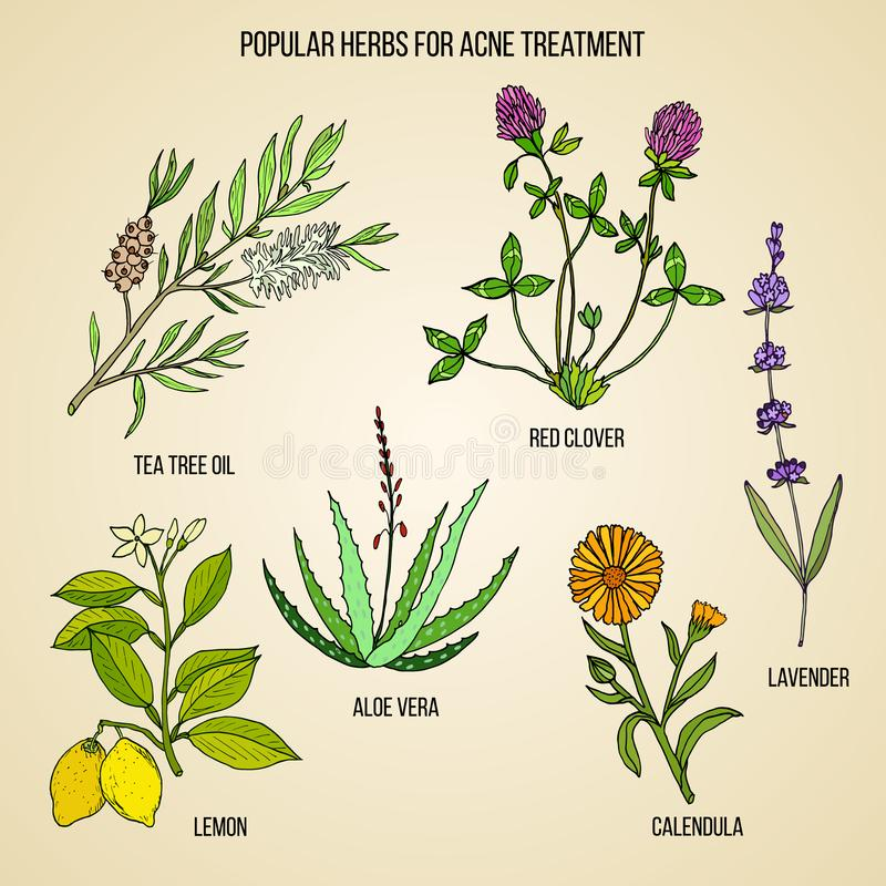 Collection d'herbes pour le traitement d'acné illustration stock