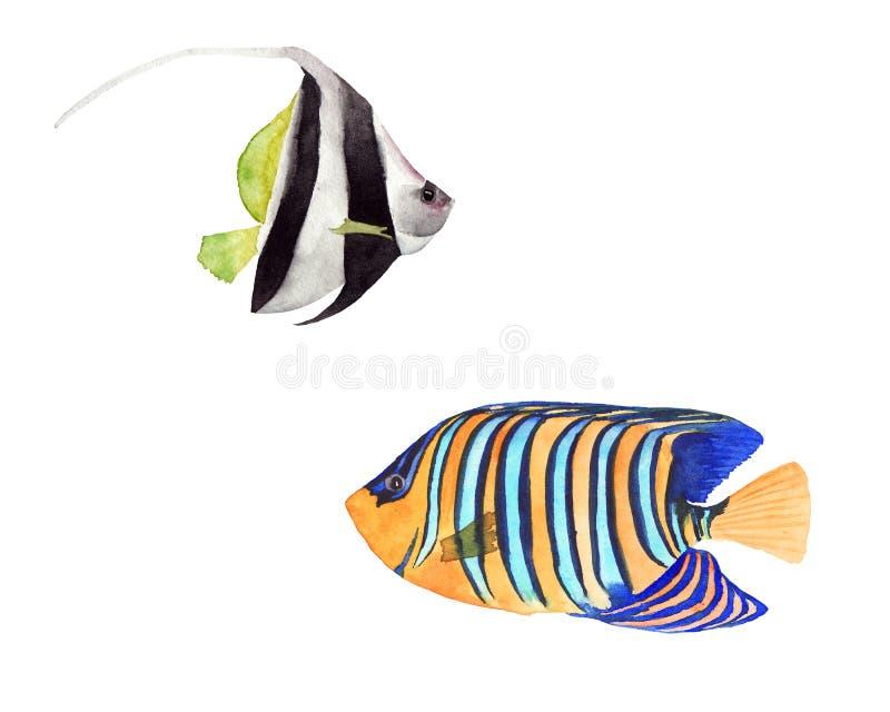 Collection d'illustration d'aquarelle de poissons tropicaux lumineux colorés d'isolement sur le fond blanc illustration stock