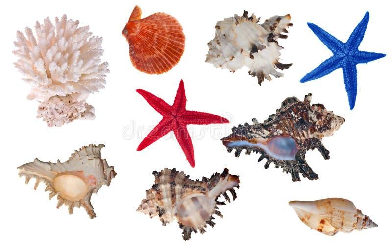 Collection d'isolement d'invertébrés de mer photographie stock