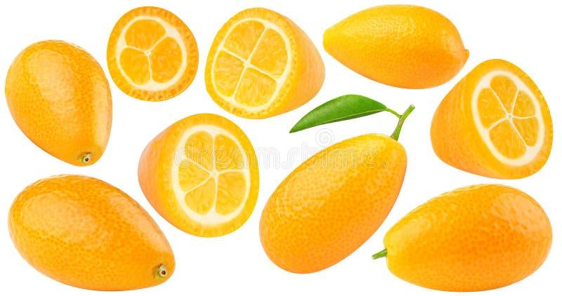 Collection d'isolement de kumquats image stock