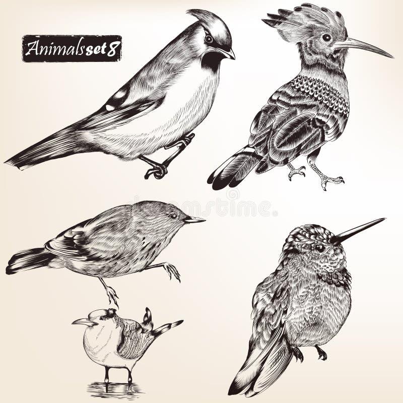 Collection d'oiseaux détaillés de vecteur illustration libre de droits