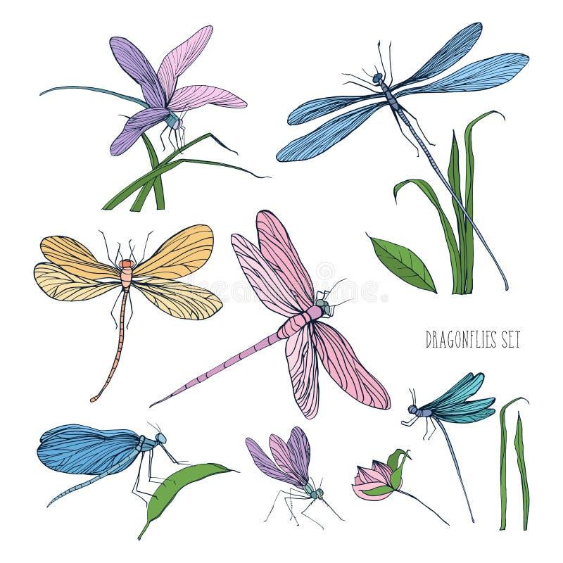Collection de belles libellules colorées d'isolement sur le fond blanc Insectes à ailes magnifiques volant et se reposant dessus illustration stock