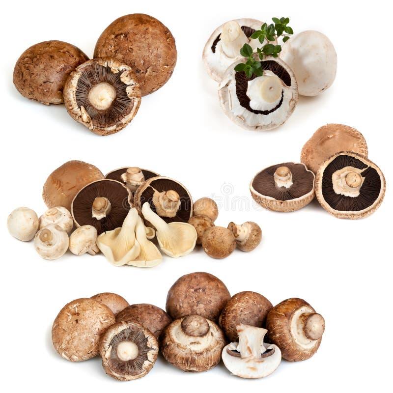Collection de champignons d'isolement sur le blanc image stock