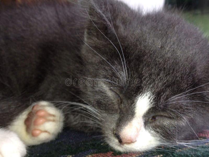 Collection 1 de chaton photographie stock libre de droits