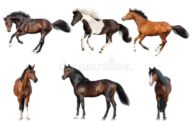 Collection de cheval d'isolement photo stock