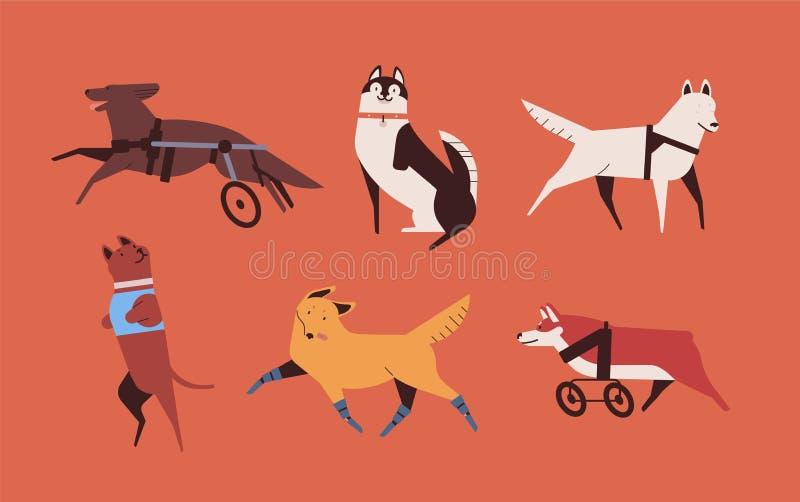 Collection de chiens handicapés drôles d'isolement sur le fond orange Paquet d'animaux domestiques ou d'animaux familiers heureux illustration stock