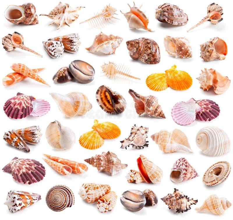 Collection de coquillage d'isolement sur un blanc images stock