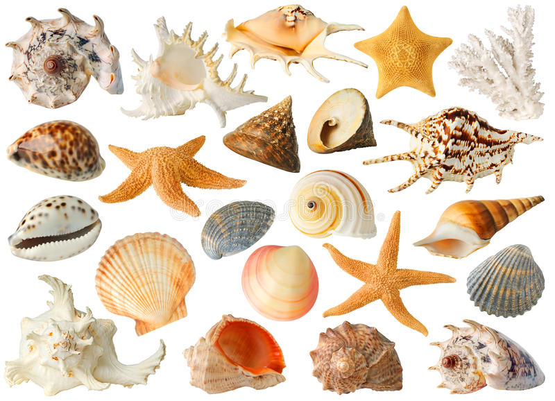 Collection de coquilles de mer photos libres de droits