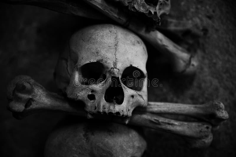 collection de crâne et d'os photo libre de droits