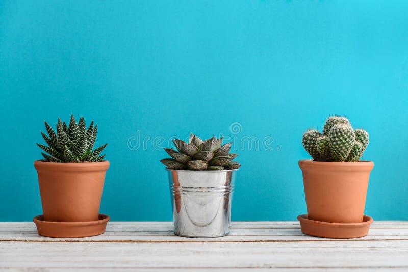 Collection de divers cactus photo libre de droits