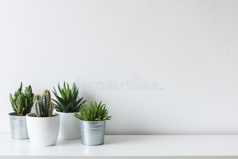 Collection de divers cactus et de plantes succulentes dans différents pots Usines mises en pot de maison de cactus sur l'étagère  photos stock