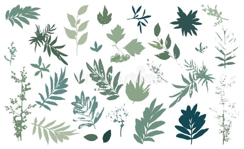 Collection de feuilles et de fleurs de vecteur ?l?ments d'isolement par vecteur sur le fond blanc illustration de vecteur