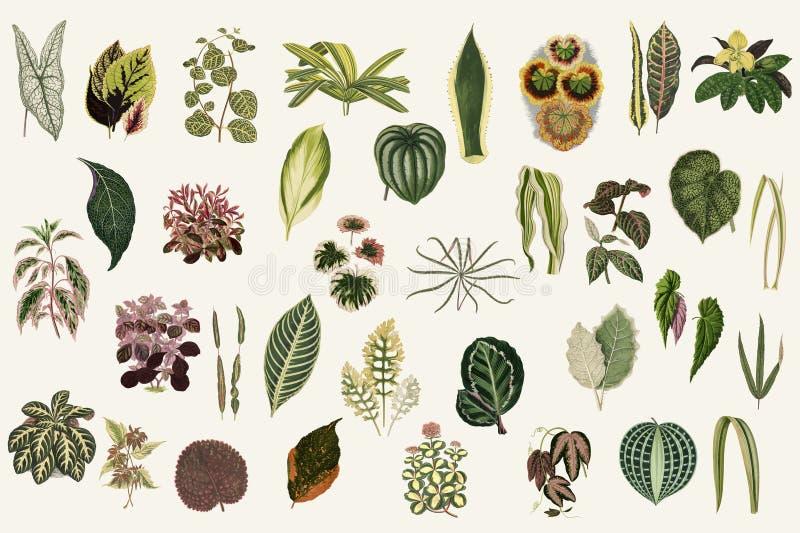Collection de feuilles de nouvelles et rares usines Beau-Leaved Digital augmentée de notre propre édition 1929 de la publication illustration libre de droits