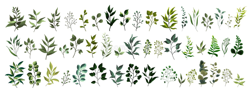 Collection de feuilles tropicales d'herbes de forêt d'usine de feuille de verdure illustration stock