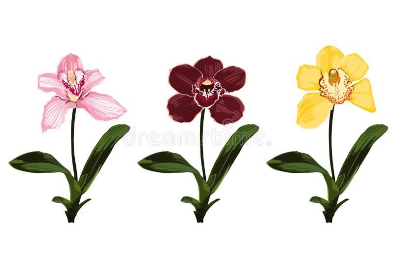 Collection de fleurs colorées d'orchidée Branches d'usines pour votre conception illustration libre de droits
