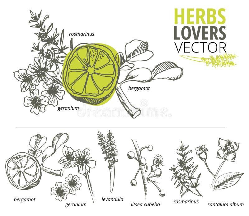 Collection de fleurs et de plantes tirées par la main images libres de droits
