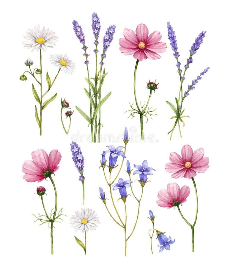 Collection de fleurs sauvages illustration stock