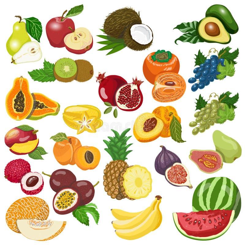 Collection de fruits d'isolement sur le fond blanc illustration stock