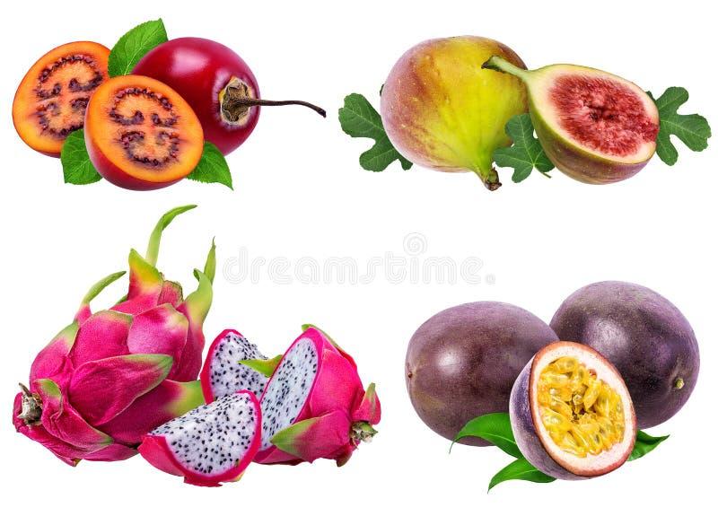 Collection de fruits exotiques d'isolement sur le blanc images libres de droits